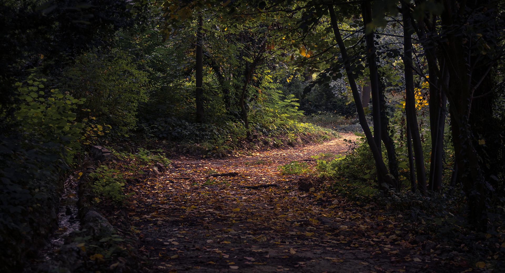 KB-slider-bosweg